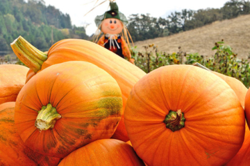 Protecting Your Pumpkin Patch By Using Tent Rentals in MD